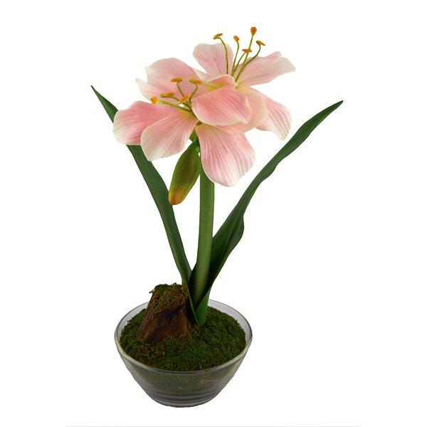 Amaryllis Floral Arrangement by Red Vanilla