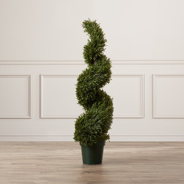 Rosemary Spiral Round Tapered Topiary in Pot by Darby Home Co