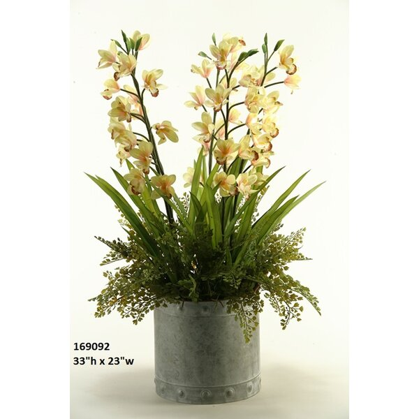 Orchids Floor Flowering Plant in Cylinder Planter by Darby Home Co