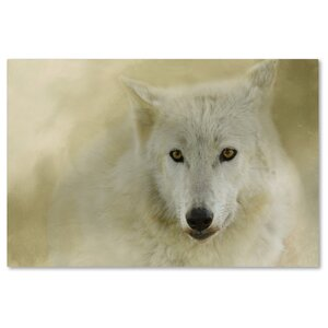 'Portrait of a Timber Wolf' Graphic Art Print on Wrapped Canvas by Trademark Fine Art