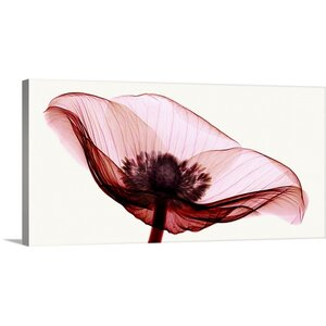 Anemone I by Robert Coop Photographic Print on Wrapped Canvas by Great Big Canvas