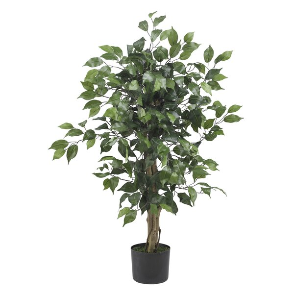 Parkes Silk Ficus Tree in Pot by Alcott Hill