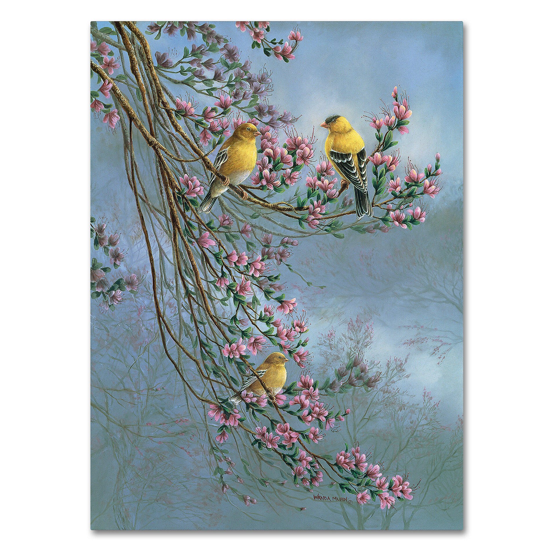Gold Finch with Magnolias Art Print