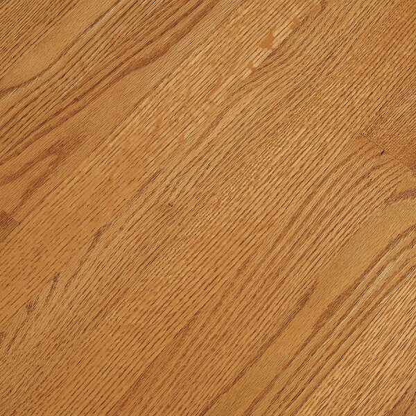 Fulton 2-1/4 Solid Red Oak Hardwood Flooring in High Glossy Butterscotch by Bruce Flooring