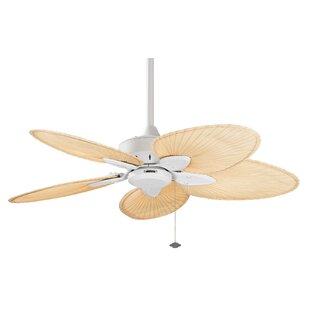 Affordable 22 Windpointe 5 Blade Ceiling Fan By Fanimation