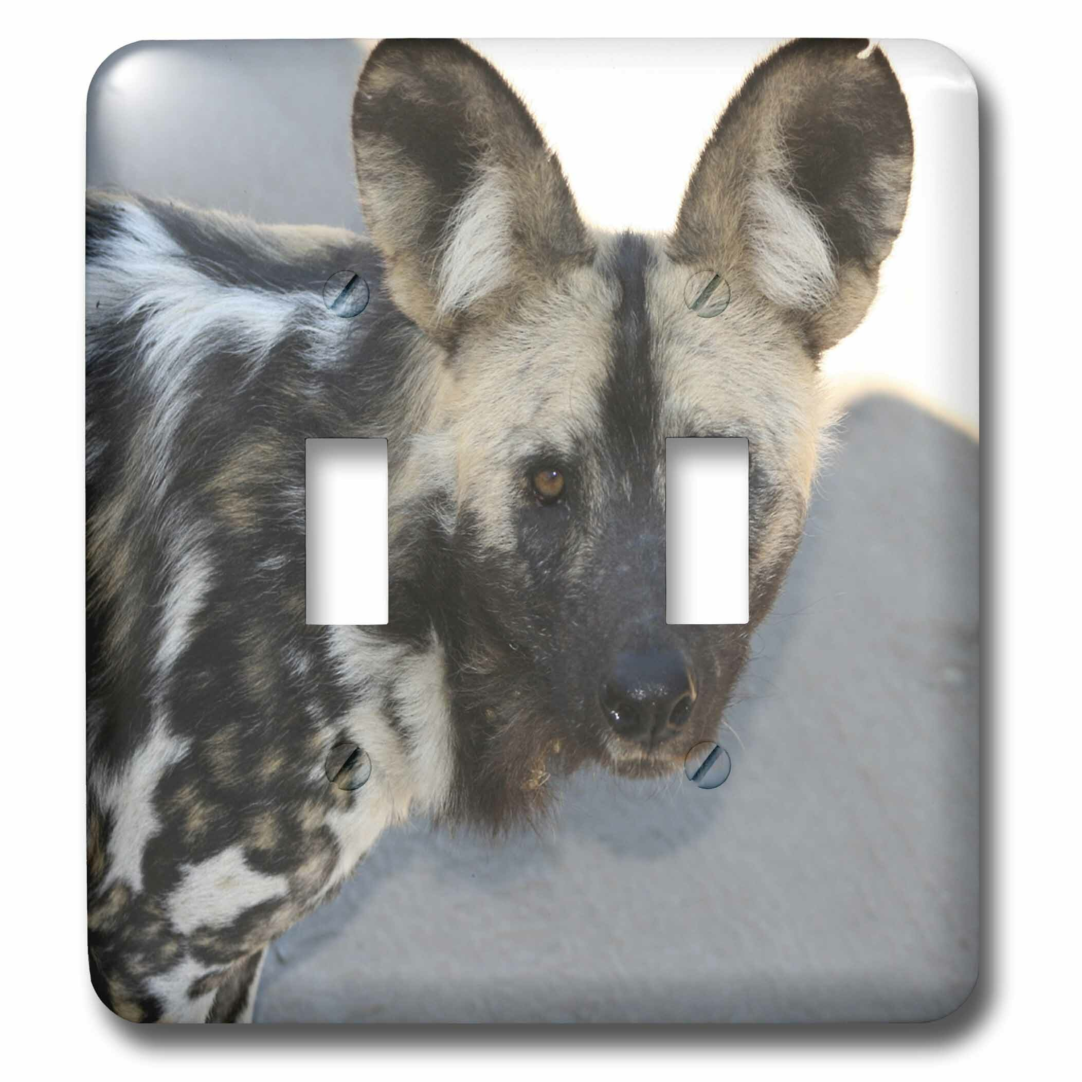 3drose Posing Looking In Both Directions Wild Dog Head Shot South African 4 Cheetahs 2 Gang Toggle Light Switch Wall Plate Wayfair