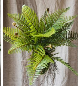 Rustic Fern Plant by Millwood Pines