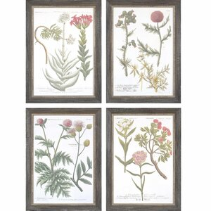 'Botanical Varieties' 4 Piece Framed Graphic Art Print Set by Gracie Oaks