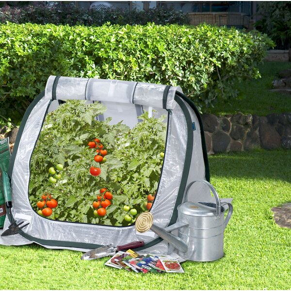 SeedHouse 2 Ft. W x 2.8 Ft. D Mini Greenhouse by Flowerhouse