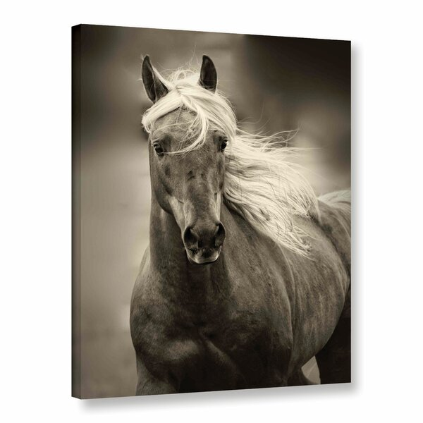 Palomino Photographic Print on Wrapped Canvas by Alcott Hill