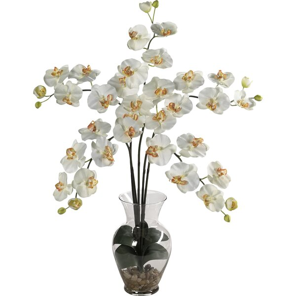 Liquid Illusion Phalaenopsis Silk Orchid Arrangement in Cream by Nearly Natural