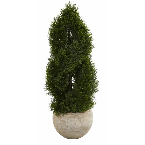 Double Spiral Floor Pond Cypress Topiary in Planter by Williston Forge