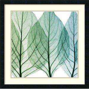 'Celosia Leaves II' by Steven N. Meyers Framed Graphic Art by Amanti Art