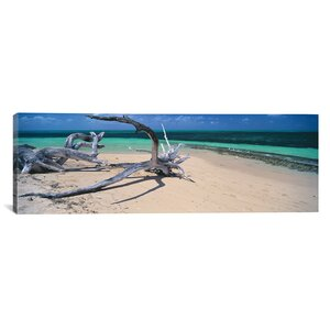 'Driftwood on the Beach' Photographic Print on Canvas by East Urban Home