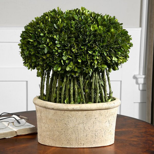 Willow Preserved Desk Top Plant in Pot by Uttermost