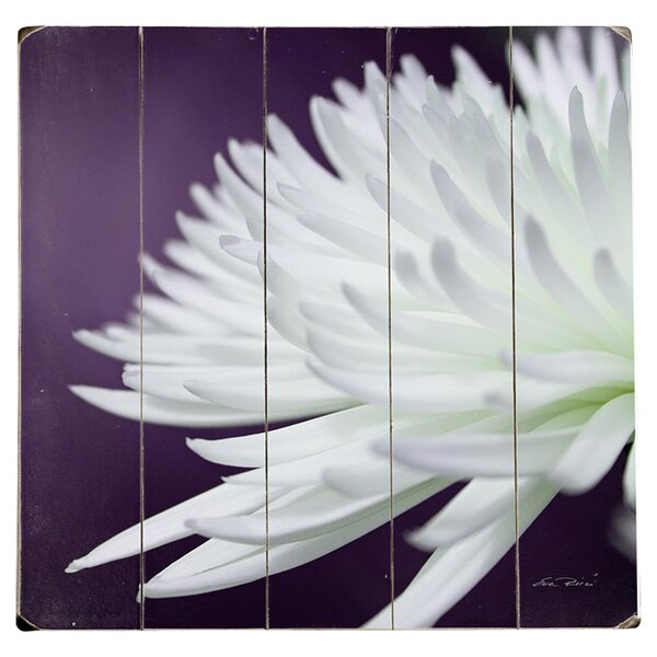 White Chrysanthemum Photographic Print Multi-Piece Image on Wood by Artehouse LLC