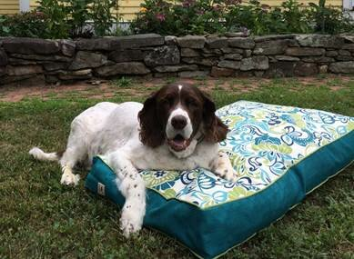 Pool and Patio Zoe Dog Bed by Snoozer Pet Products