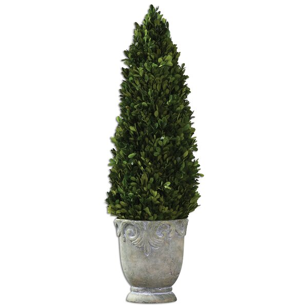 Boxwood Cone Topiary in Planter by Alcott Hill