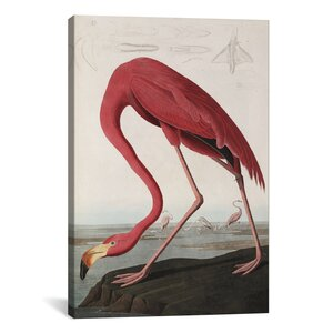 'Flamingo Drinking at Water's Edge' by John James Audubon Painting Print on Canvas by iCanvas