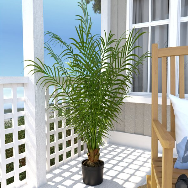 Silk Areca Palm Tree in Pot by Beachcrest Home