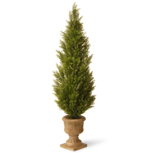 Gutierres Topiary with Urn by Darby Home Co