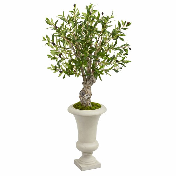 Artificial Olive Tree in Urn by Darby Home Co
