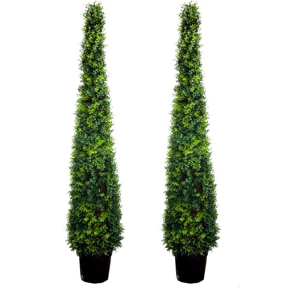 Artificial Money Leave Tower Cone Topiary Floor Cedar Tree in Pot (Set of 2) by Darby Home Co