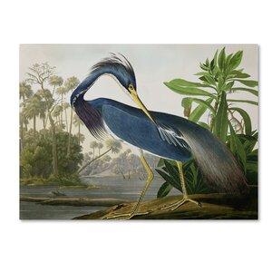Louisiana Heron by John James Audubon Painting Print on Wrapped Canvas by Trademark Fine Art