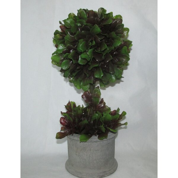 Boxwood Topiary in Pot by Jeco Inc.