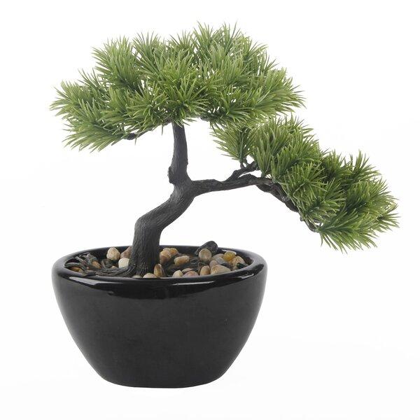 Desktop Bonsai Tree in Pot by World Menagerie