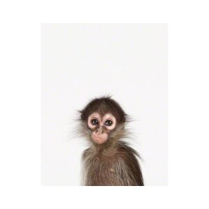 Little Darlings Baby Monkey by Sharon Montrose Photographic Print by The Animal Print Shop by Sharon Montrose