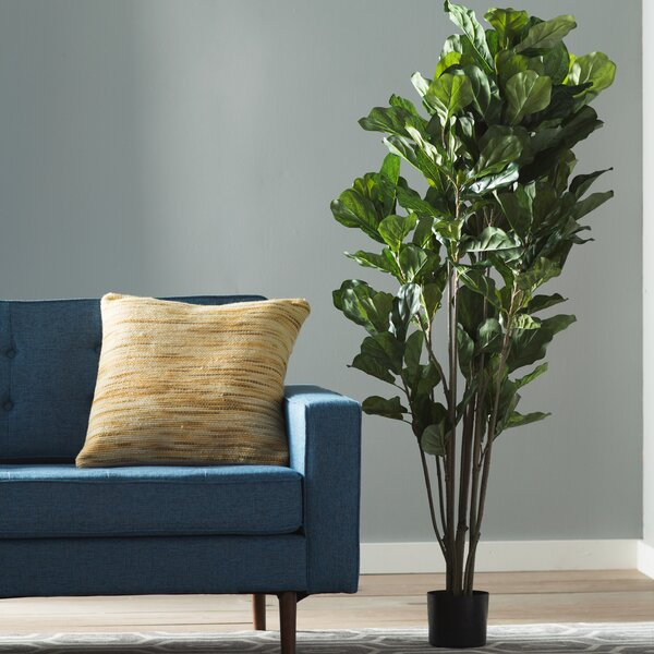 Floor Fiddle Leaf Fig Tree in Pot by Corrigan Studio