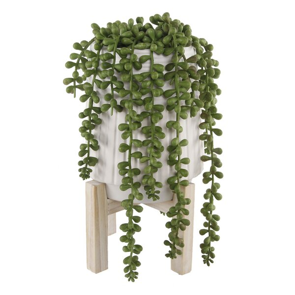 Donkey Tail Ceramic Desktop Succulent Plant in Pot
