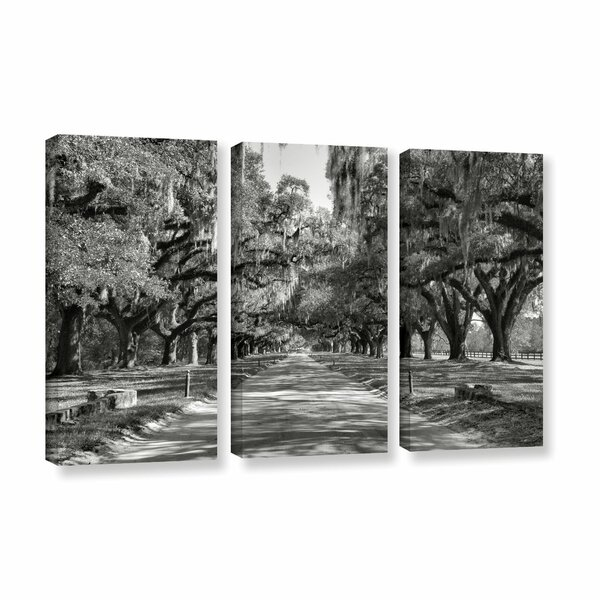 Live Oak Avenue Ii by Steve Ainsworth 3 Piece Photographic Print on Gallery Wrapped Canvas Set by ArtWall