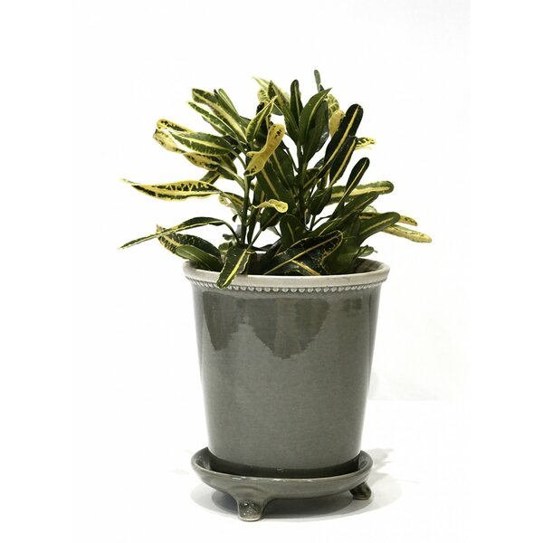 Alois Ceramic Pot Planter by Gracie Oaks