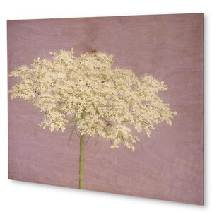 'Queen Anne's Lace' Painting Print on Plaque by KAVKA DESIGNS