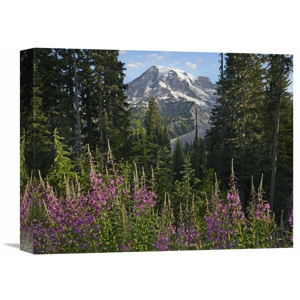 Nature Photographs Fireweed Flowering and Mount Rainier, Mount Rainier National Park, Washington Photographic Print on Wrapped Canvas by Global Gallery