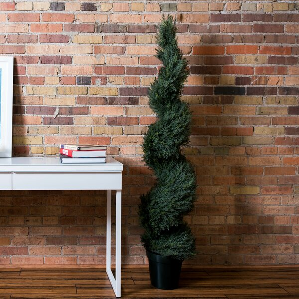 UV Pond Cypress Spiral Tree in Pot by Darby Home Co