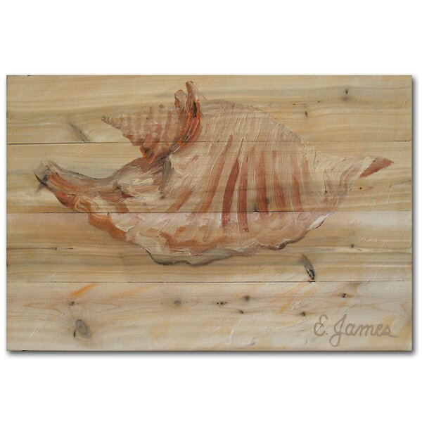 Sea Shell 2 Painting Print Plaque by WGI-GALLERY