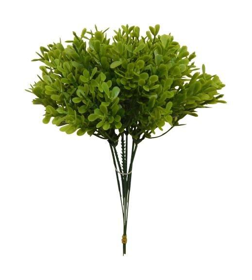 Pick Desktop Boxwood Plant by Gracie Oaks