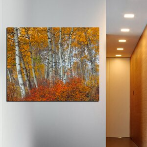 Morning Aspens by Jesse Estes Photographic Print on Wrapped Canvas by Cortesi Home