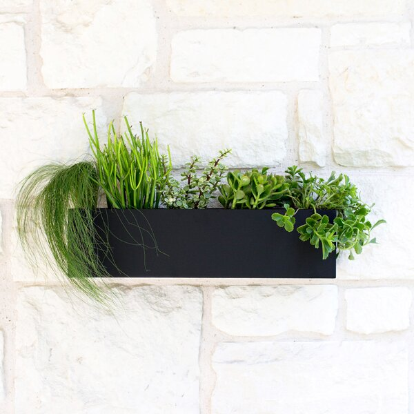 Clarkesville Steel  Wall Planter by Urban Mettle