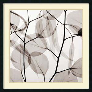 'Eucalyptus Leaves (Positive)' by Steven N. Meyers Framed Graphic Art by Amanti Art