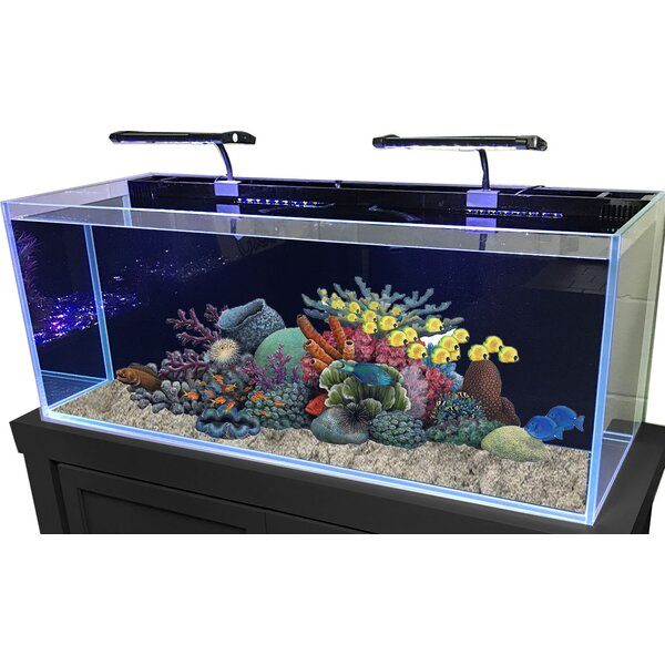 60 Gallon Rimless Glass Combo Aquarium Kit by RJ Enterprises