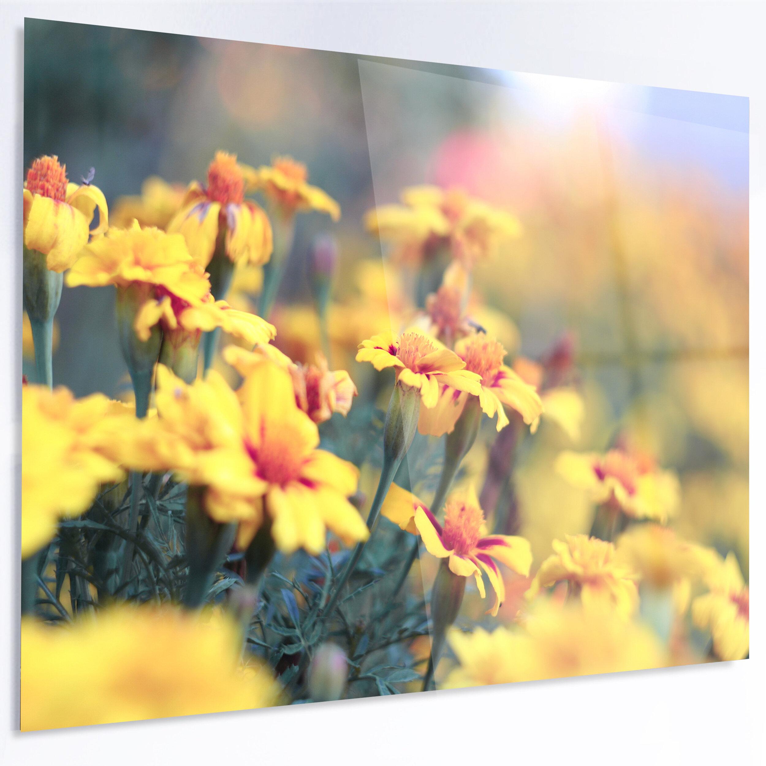 DesignArt \'Pale Yellow Marigold Flowers\' Photographic Print on Metal ...