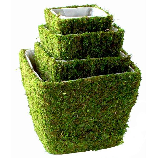 Real Moss Pot Planter Set (Set of 6) by SuperMoss™