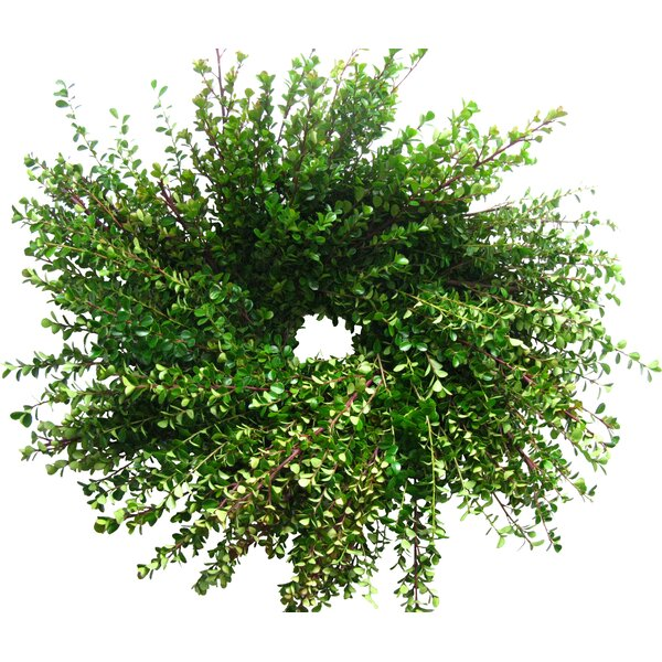 18 Boxwood Wreath by From the Garden