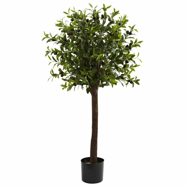 Olive Tree Topiary in Pot by Darby Home Co
