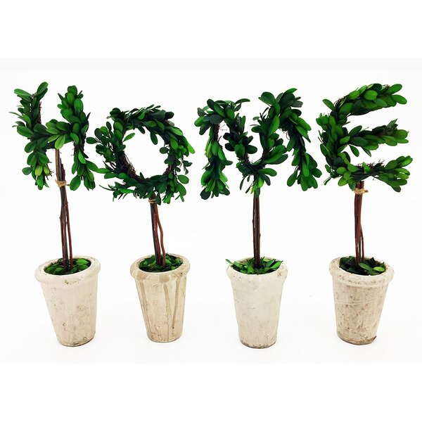 Modern Home Real Preserved Boxwood Monogram Letter H Tree in Pot by Vandue Corporation