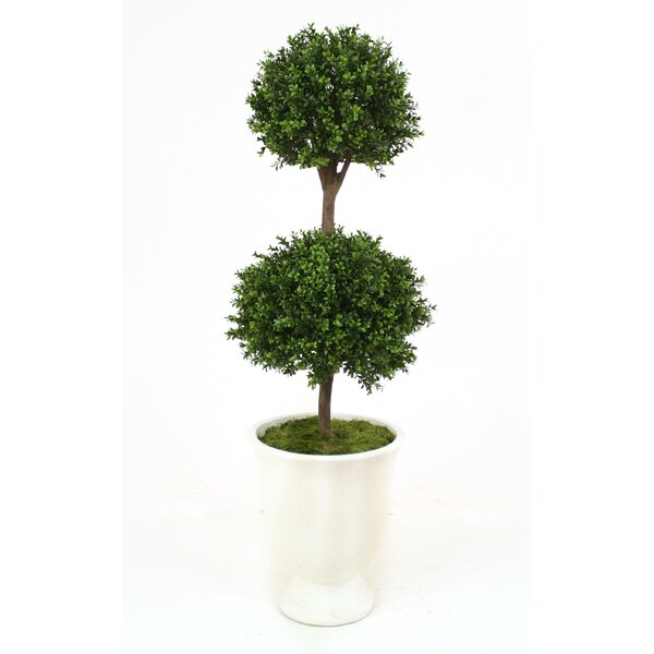 Boxwood Double Ball Topiary in Urn by Distinctive Designs